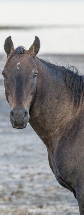 Wild Horses Photography